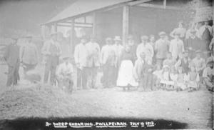 Gathering at Pwllpeiran , Sheep Shearing 1916