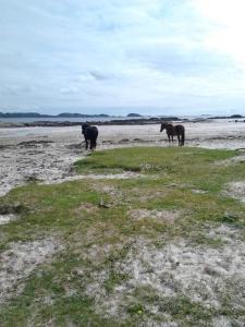 Sleeping Horses Iona